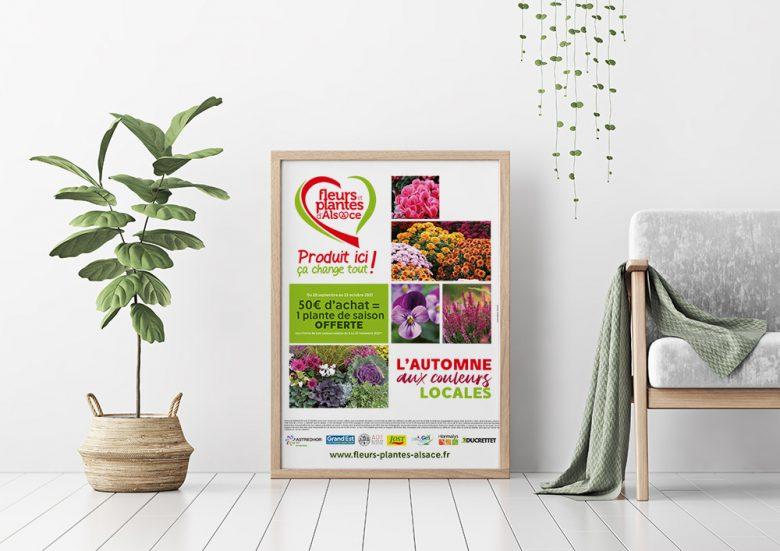 Fleurs et Plantes d'Alsace